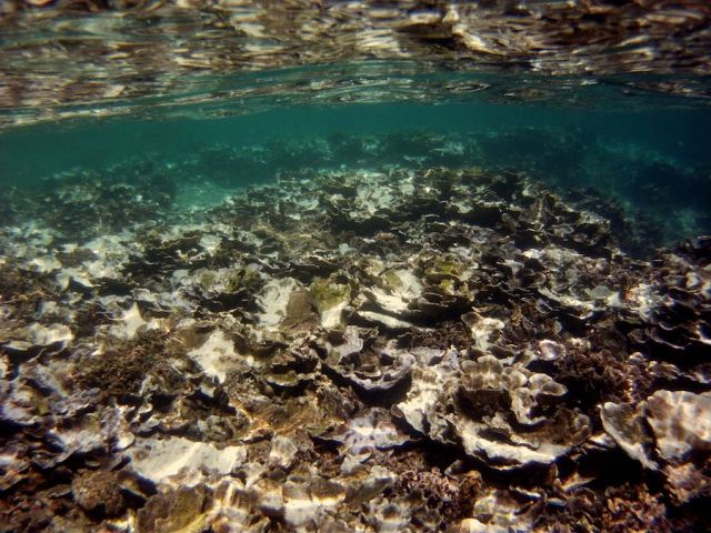 Coral bleaching off the coast of Thailand