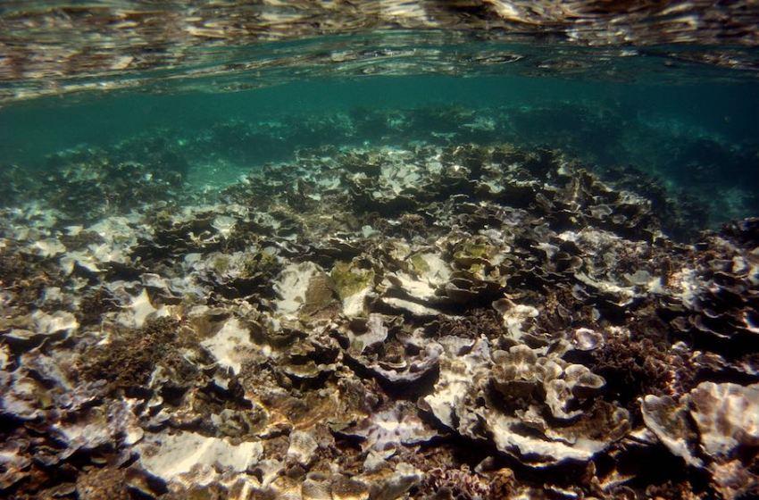 Climate Change, El Niño Prolong Coral Die-off