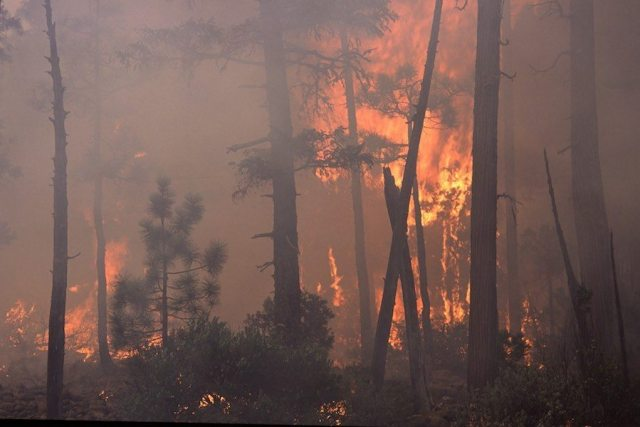 The impact of climate on forests and wildfire