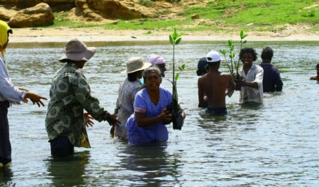 Lives depend on healthy mangrove forests