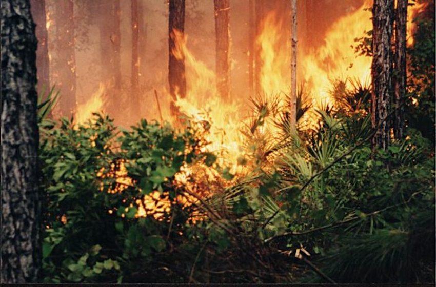 Florida Wildfires Highlight Benefits of Prescribed Burns, Conservation Measures