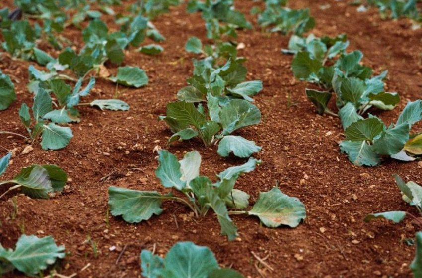 How Different Methods of Soil Health Can Combat Climate Change