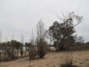 2012: Lake Benanee