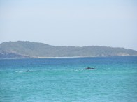 Either dolphins or whales in the Booti Booti National Park. I'm going with whales. It's more exciting.
