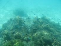 View from the semi-submersible boat that took us snorkeling