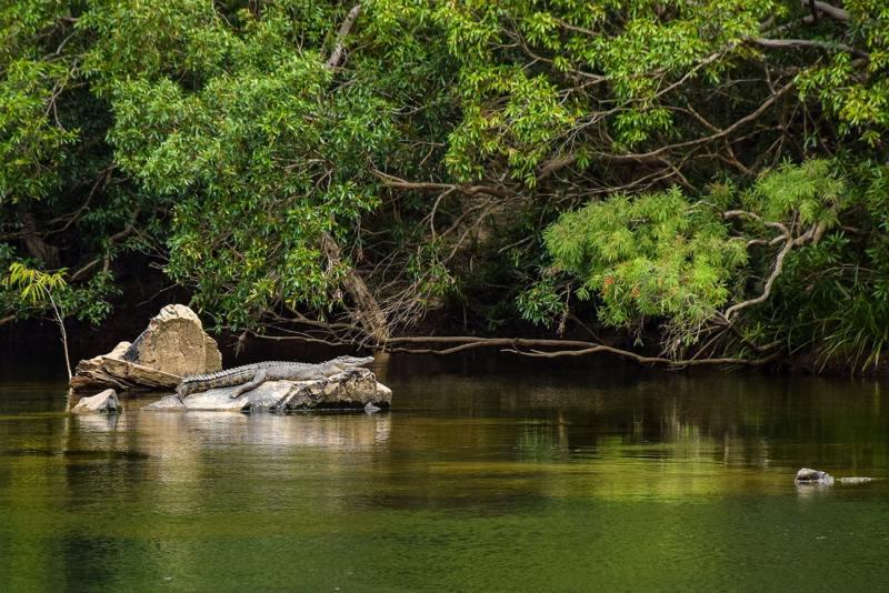 Voir un crocodile sauvage en Australie