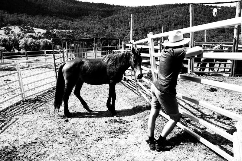 Travailler avec les chevaux en Australie