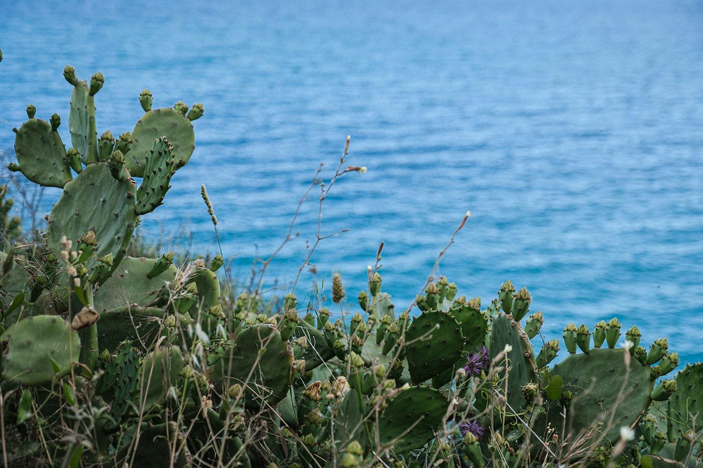 végétation de la côte Vermeille