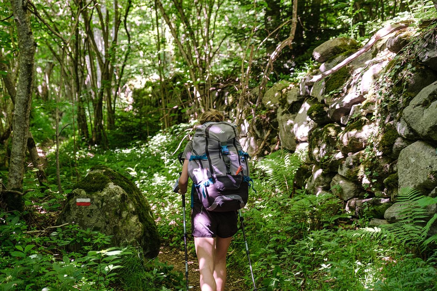 Forêt en montant au pic du Canigou