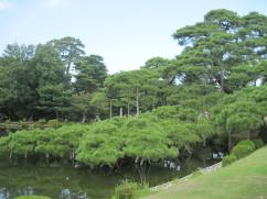 The branches of the Karasaki Pine extend far over the water with an elaborate system of supports