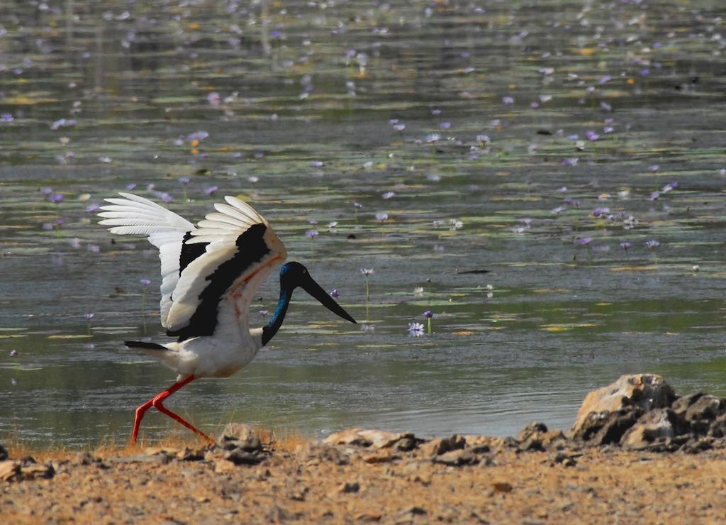 Australie - Kakadu