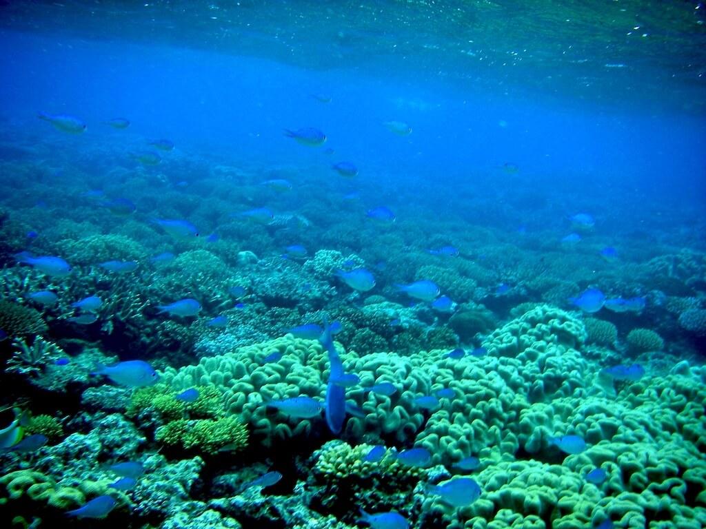 Australie - Green island