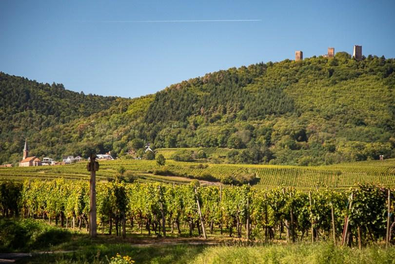 Alsace - un des nombreux châteaux surplombant la plaine