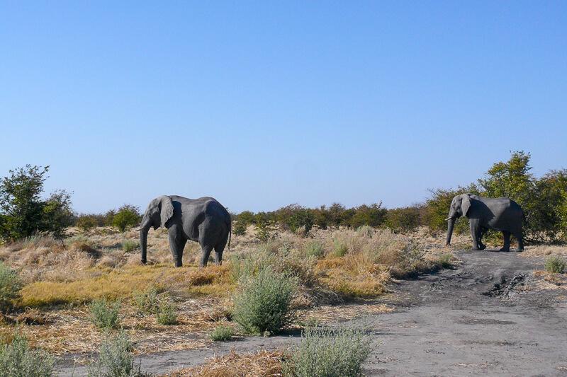 Afrique australe - Botswana. Eléphants
