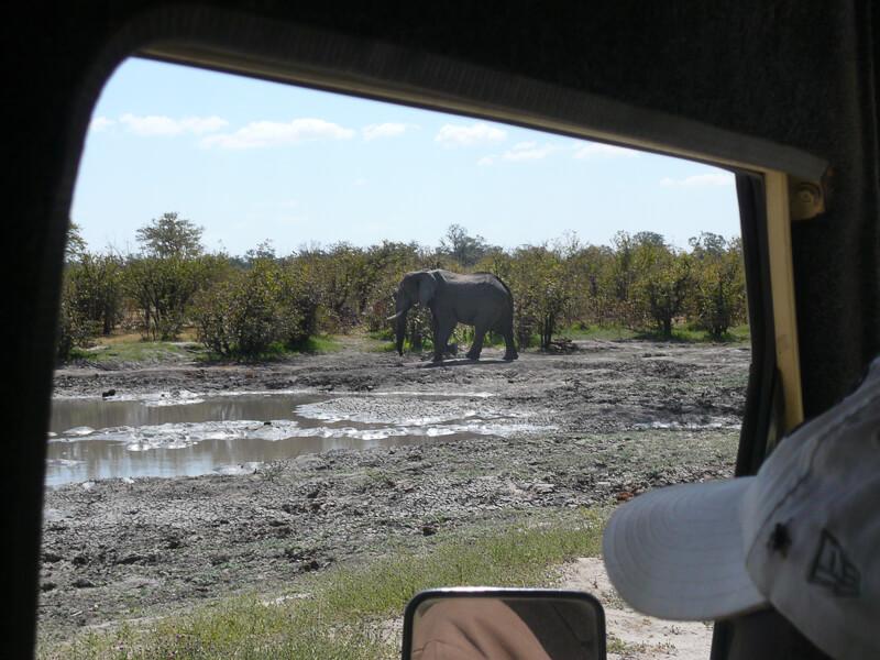 Afrique australe - Botswana. Eléphant solitaire près d'un point d'eau