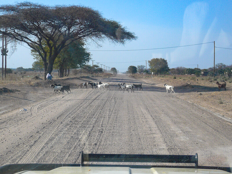 Afrique australe - Botswana, au sable succèdent les pistes de tôle ondulées