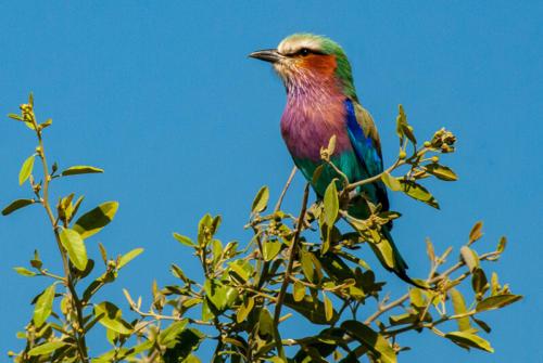 afrique australe - les oiseaux