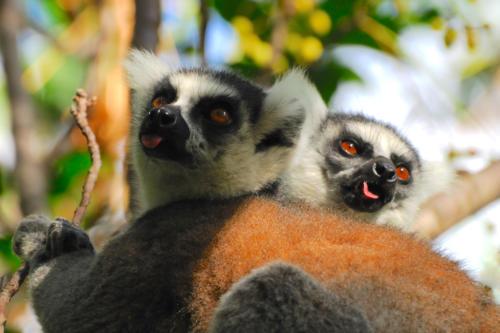 Madagascar-Reserve d'Anja