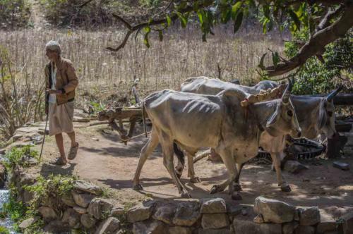 Inde, Rajasthan, Narlai et Ranakpur