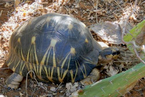 Madagascar - autre faune sauvage