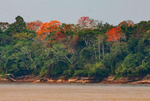 Pérou - Amazonie 1