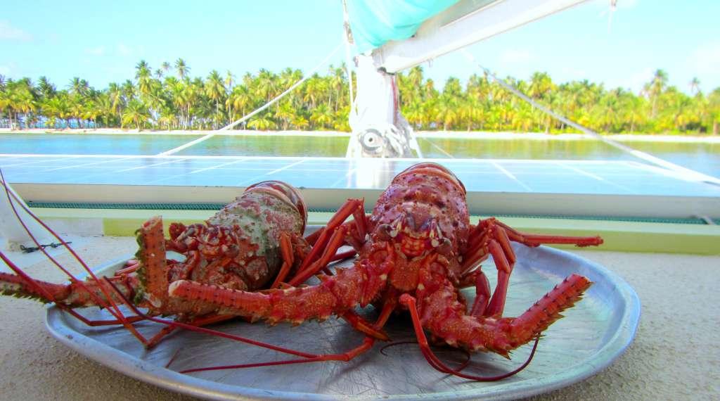 Lobster dinner. San Blas, Panama
