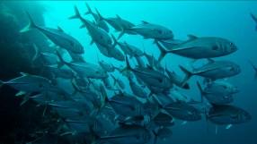 Diving @ Balicasag