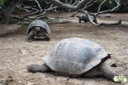 Schildkröten im Centro de Crianza
