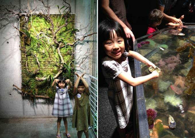 Making the most out of our annual membership at Cal Academy of Sciences