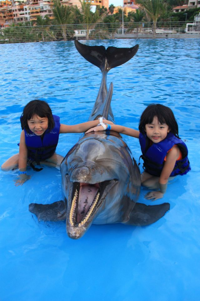 Swimming with the dolphins in Cabo San Lucas