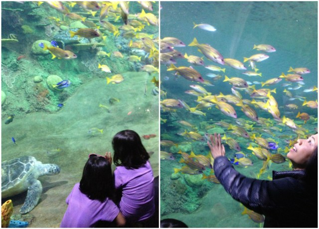 Mesmerized by the fishes and sea creatures