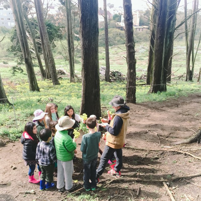 Hiking in the Presidio and learning about plants, flowers, and bee habitats.
