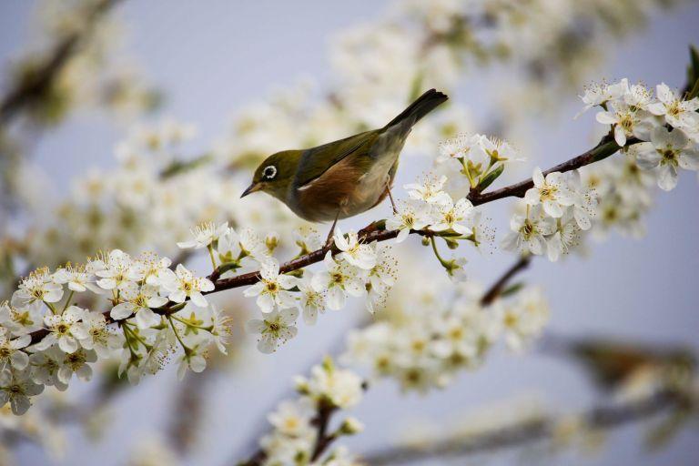 beautiful bird bloom blooming