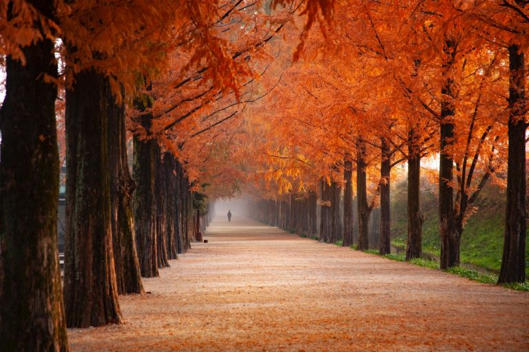 photo of person walking near orange leafed trees