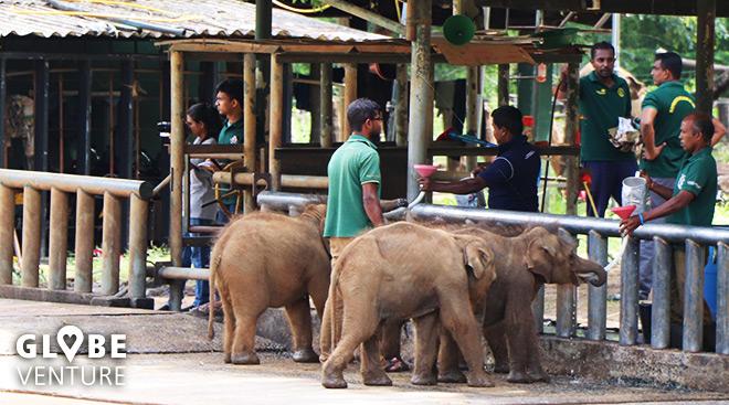 Raubtierfütterung im Elephant Transit Home