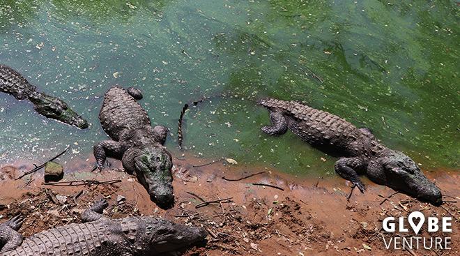 Madras Crocodile Bank