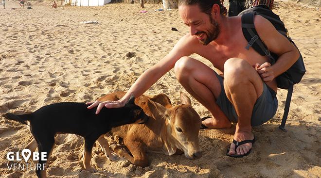 Mit Hunden und Kühen am Strand kuscheln in Gokarna