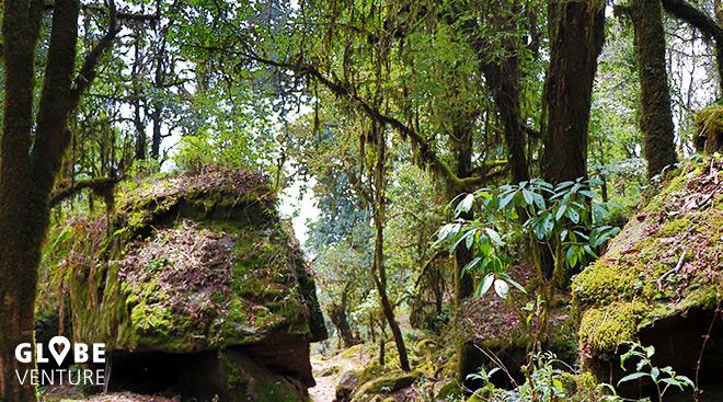 Nepal, Mardi Himal Trek, Regenwald