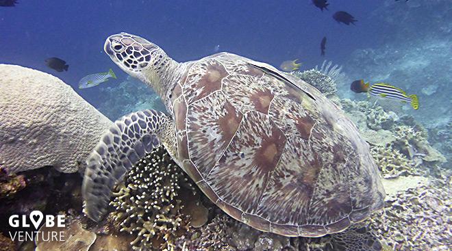 Schildkröte Bunaken