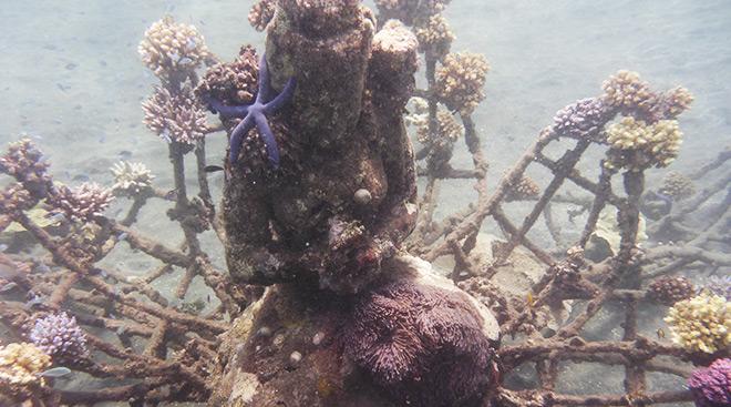 Coralrestoration Indonesien Bali Pemuteran