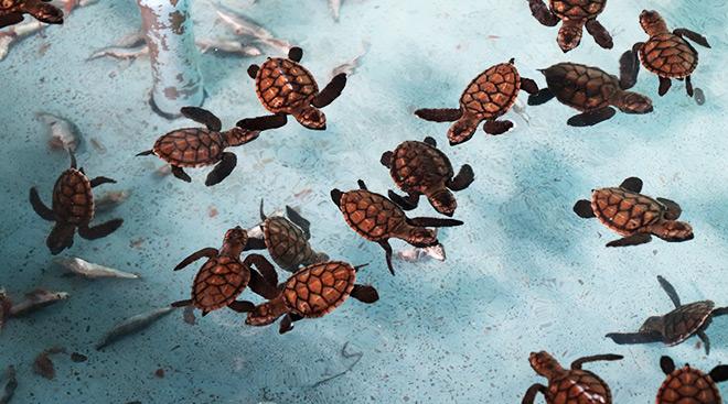 Bali Pemuteran Turtle Station