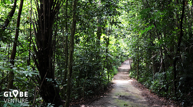 Macritchie Reservoir & Trail