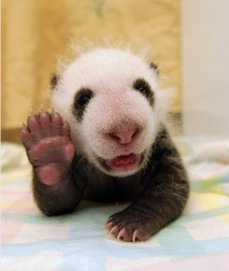 globio-education-panda