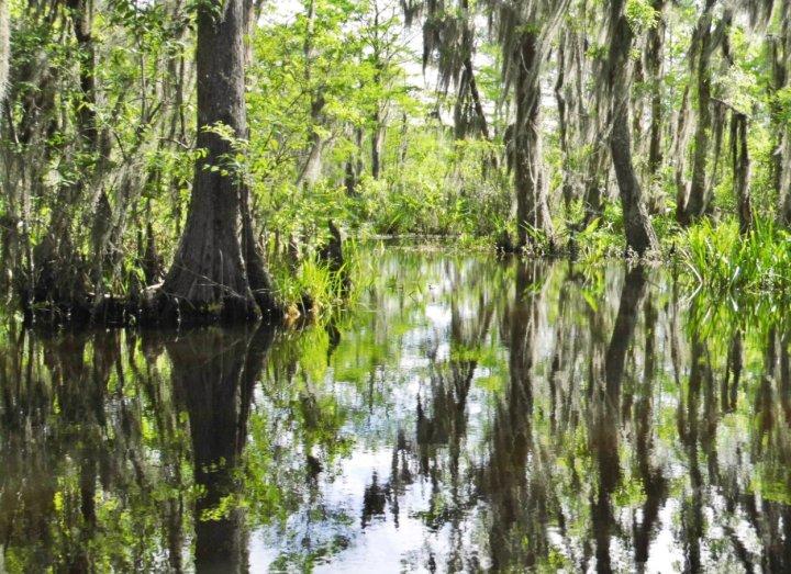 Honey Island Swamp in Louisiana, US.
