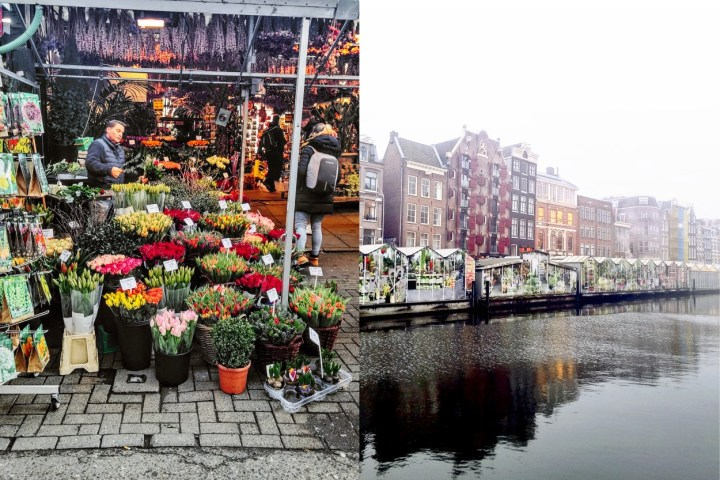 Facts about the Amsterdam Bloemenmarkt