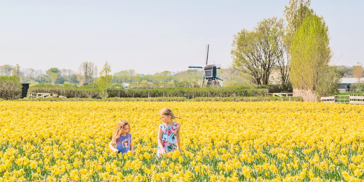 The Netherlands in Bloom: Celebrating the Spring Season at 5 Stunning Locations