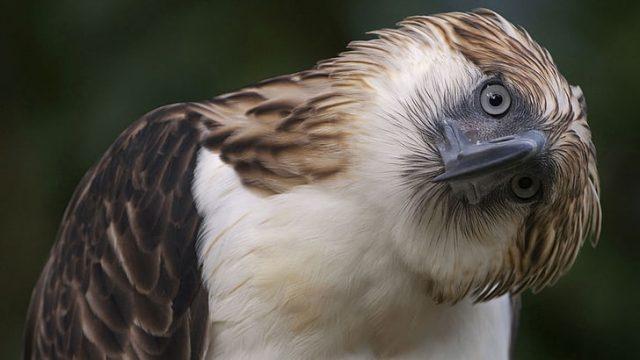 O que significa quando você vê uma águia? Significado e simbolismo