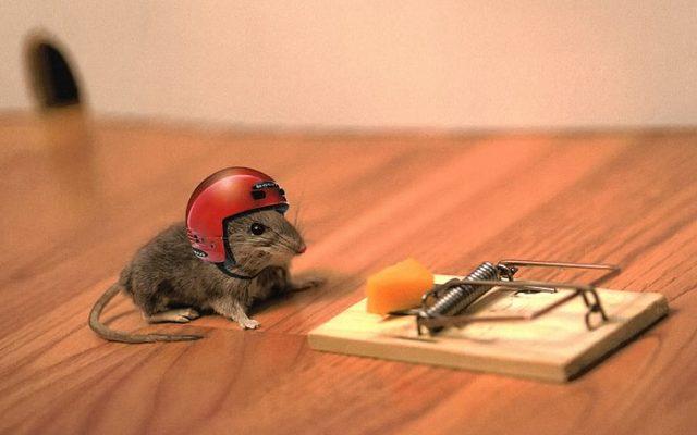 O que significa quando você sonha com ratos?
