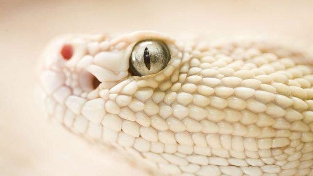 Sonhando com cobras brancas: Veja seu significado e simbolismo reveladores