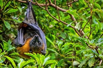 Simbolismo de morcego, significado e o animal espírito de morcego